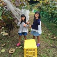 ヤマソー収穫だー!!