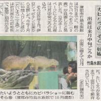 蒲郡市竹島水族館 - カピバラショー中止のお知らせカピバラ出産に向けて
