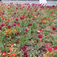 花がいっぱい!!全国緑化都市よこはまフェア開催中