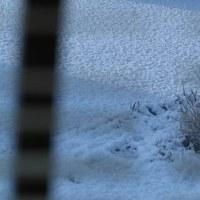 ついに初雪&初積雪