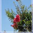 暑い日のリハブ土田