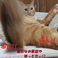 ダイちゃん日和タヌキか?!