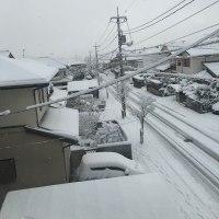 久しぶりの積雪でした。
