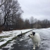 犬猫散歩に出られた金曜日