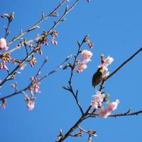☆春の足音が...見頃に♪