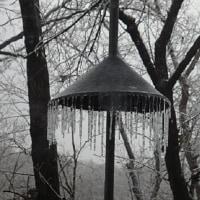 #798: Misty day