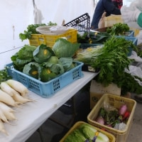 ユズ、シイタケ、大根、白菜など冬野菜が続々、今日もふれあい朝市を開催…