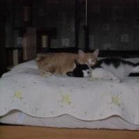 トラちゃん!クマちゃん仲良く寝ていますね(#^.^#)