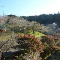 小原四季桜と木の水車