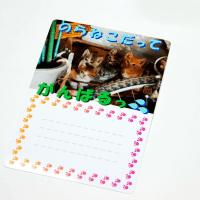 のらねこのメッセージカード