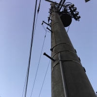 オサンポ walk - 電柱と萩 A telegraph pole & a Japanese bush clover