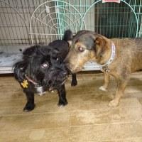 犬占いをしました。 広島が日本一になります。日本シリ-ズ盛り上がりますね~