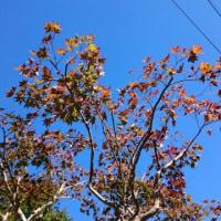 秋晴れ ! !