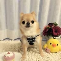 お誕生日おめでとう(*^^*)