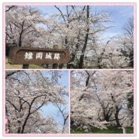 雉岡城跡 の桜