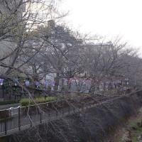 桜並木イベントの準備中