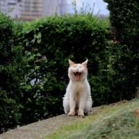 東京下町ねこ散歩Ⅸ 2016年9月 その10