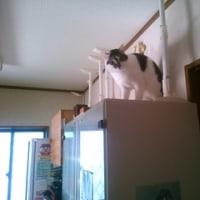 多頭飼育崩壊の猫達・お預かり様のお宅へ