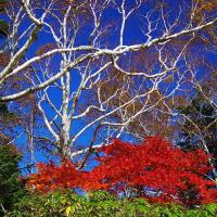 紅葉に雪の季節