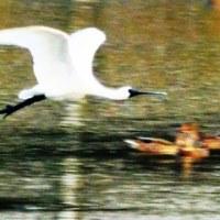2016年10月2日/〈日記〉580・「日本の重要湿地500」に選定