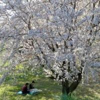 春ラララ・小布施町