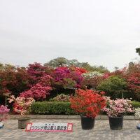 2017年04月22日 つつじが岡公園へ行ってきました