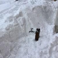 雪の中から