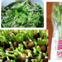 「葉物野菜」高騰してますね。