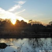 屋敷林の冬 落陽に映える欅の扇