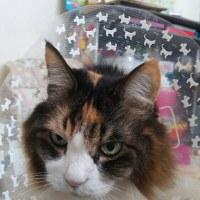 猫の日スペシャル~(=゚ω゚=)