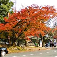 日吉大社の紅葉