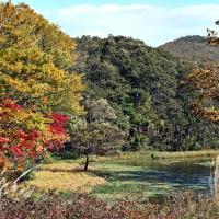 田代平高原「グダリ沼」の景観(紅葉No1)