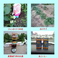 ジャンボイチゴの花