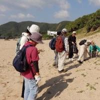 ロングトレイルウォーク手広海岸・明神崎  シロバナミヤコグサなど
