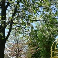 花水木が綺麗な街並み