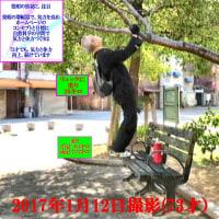 リュックの重り20キロ、足の重り13キロで、エネルギー効果を強くして、椅子に蹴り上がり