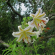 裏山の夏の花