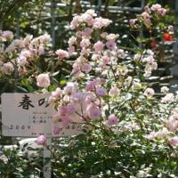 鎌倉文学館と由比ヶ浜の古民家蕎麦屋
