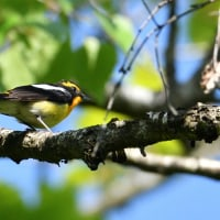 バードウォッチングのイベント参加前に、野鳥撮影の自主練習。