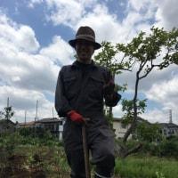 【桑山農園さんの無農薬栽培で育てたブルーベリー13本の苗を畑に植えました】