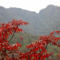 26 宮島(紅葉谷~獅子岩~かや谷~紅葉谷)登山  順調に下山を