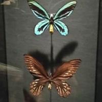 国立科学博物館 『大英自然史博物館展』