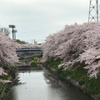 ☆ お花見 ☆