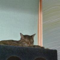 ネコカフェ「きぶん屋」さん お母さんネコと子ネコ