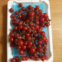 トマトも小粒で…♪