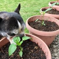 家庭菜園オープン