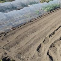 肥料を入れないで、耕うんして置いた。