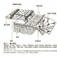 抜粋 福土審『内臓感覚』脳と腸の不思議な関係 NHKブックス