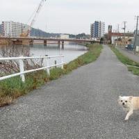 散歩の大川沿い