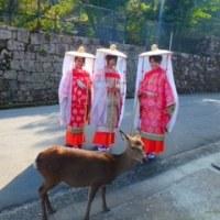 平安衣装・着物よそおい体験「みやじま 紅葉の賀」へ行ってきました